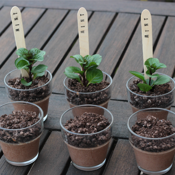 Oreo dirt desserts or chocolate mint puddings