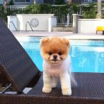 The Most Famous Pets on Instagram