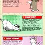 10 Cat Super Powers