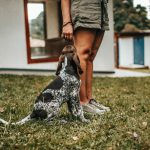 How to Choose the Right Family Dog – Five Points to Consider
